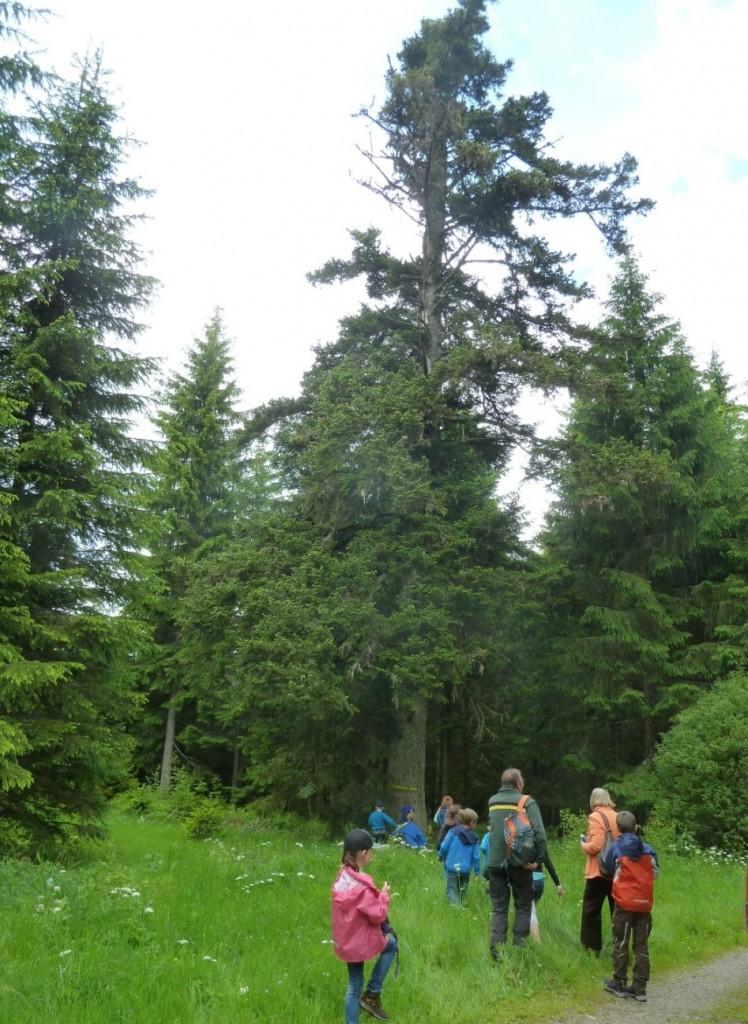 Wald 05